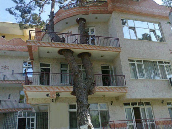 Pohon di tengah rumah