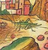 Middeleeuwse krekel