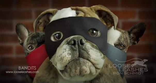 Hilarious Dog Portraits By Ron Schmidt