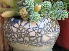 Meus vasos de coleção