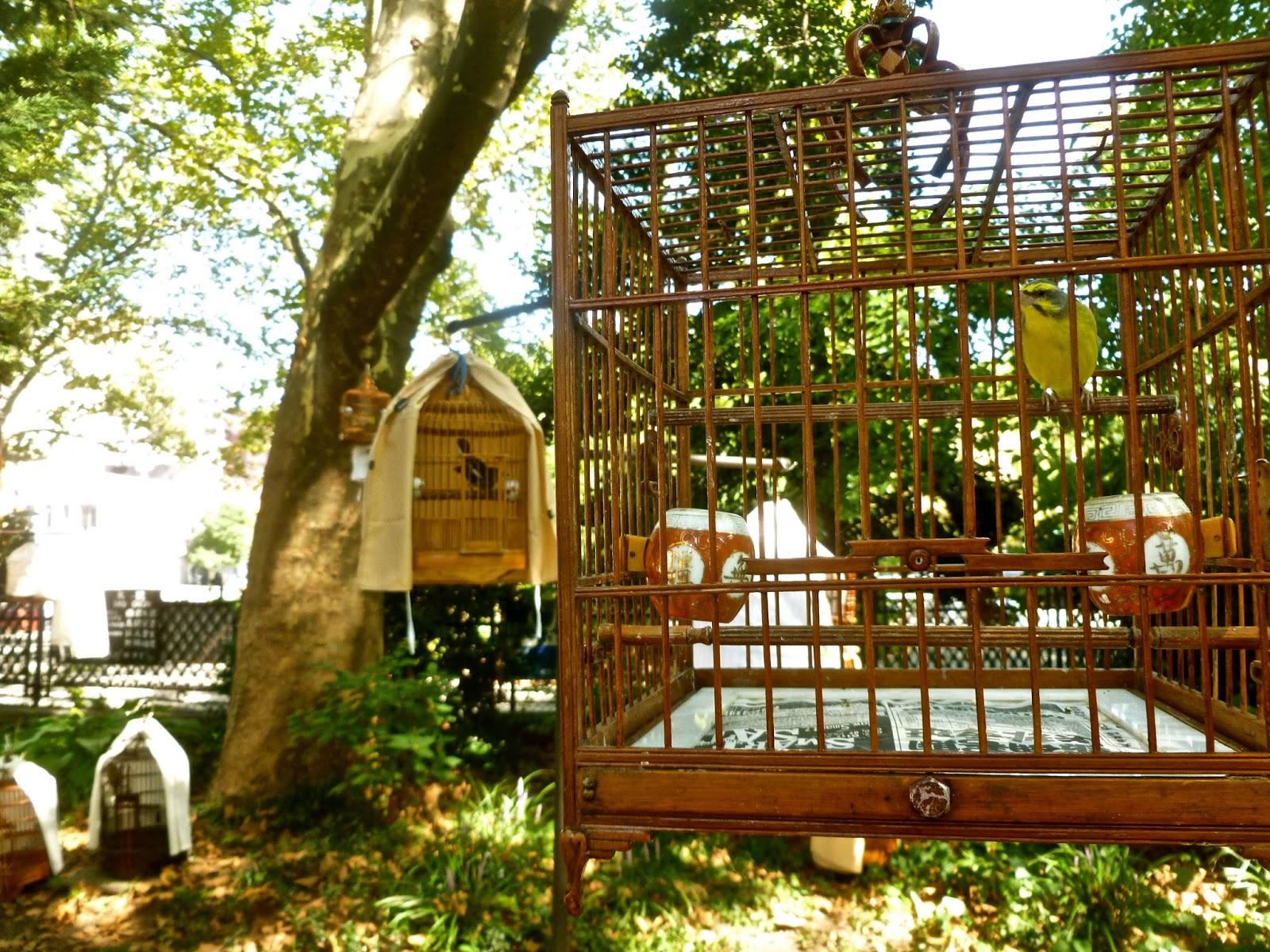 Jeremiah\'s Vanishing New York: Hua Mei Bird Garden