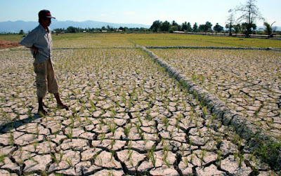 Kemarau Panjang Di Jatim Ancam Lahan Pertanian