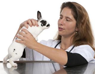salud de los conejos