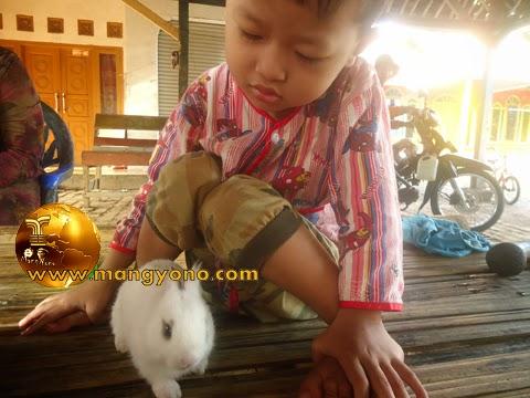 Proses pertumbuhan kelinci dari bayi sangat cepat