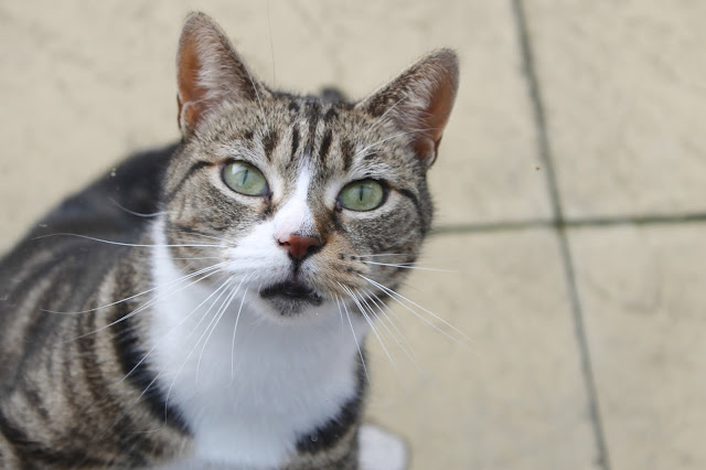 argos cat insurance, pet insurance, cat insurance, pet lovers, cat lovers, tabby cat