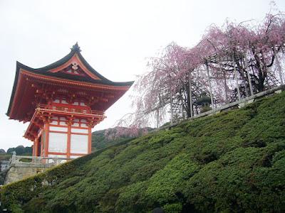 京都市・音羽山 清水寺 さくら
