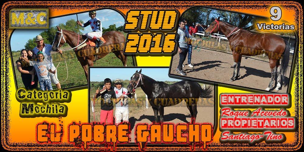 STUD EL POBRE GAUCHO