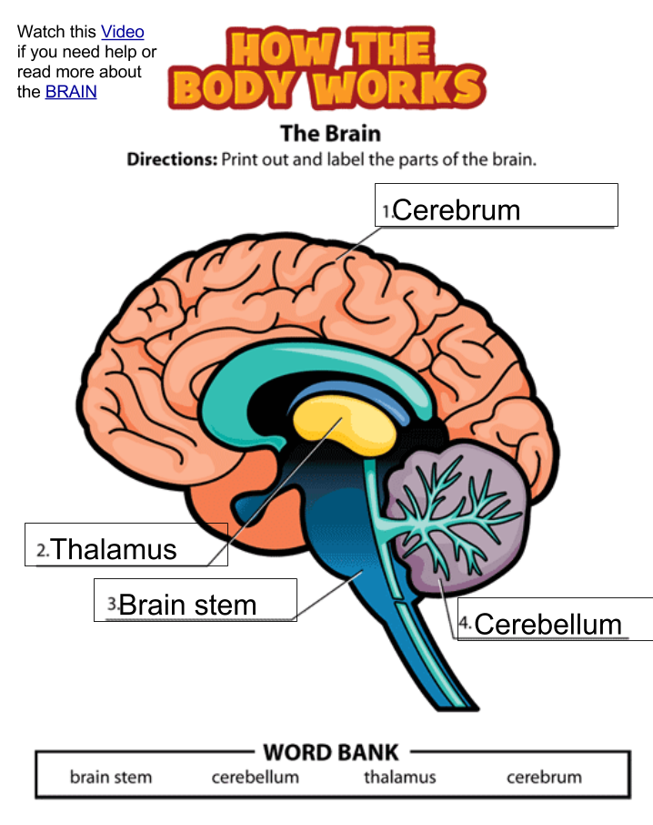 Several Parts Of Your Brain Help You >> Room 7 Learn Zone Parts Of The Brain