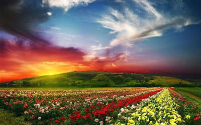 Un lindo paisaje natural cubierto de flores de colores