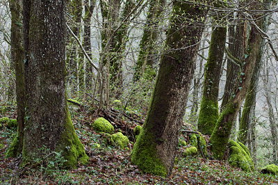 Trees in the forest at the beginning of a new spring