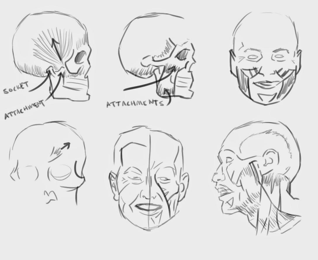 1000 Bad Drawings: 0059 Loomis Head Anatomy
