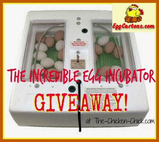 The Incredible Egg Incubator Giveaway at The-Chicken-Chick.com