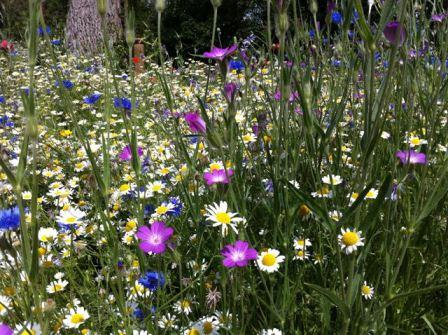 Meadowmat bringing back our wild flowers Using Wild