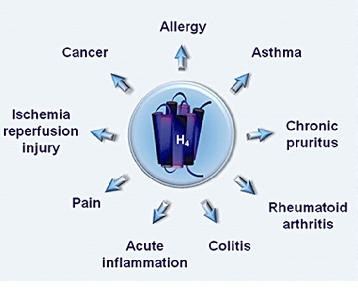 Antihistamine closest to dimebon