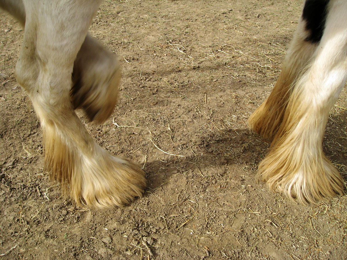 Mites in Horses http://myequestrianworld.blogspot.com/2011/09/first-of-all-i-will-say-sorry-i-forgot.html