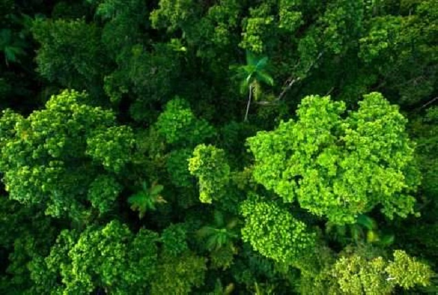 Scientists propose new evolution model for tropical rainforests
