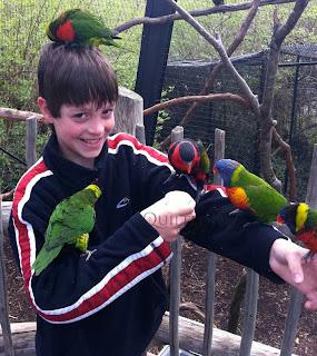 BirdManLorries
