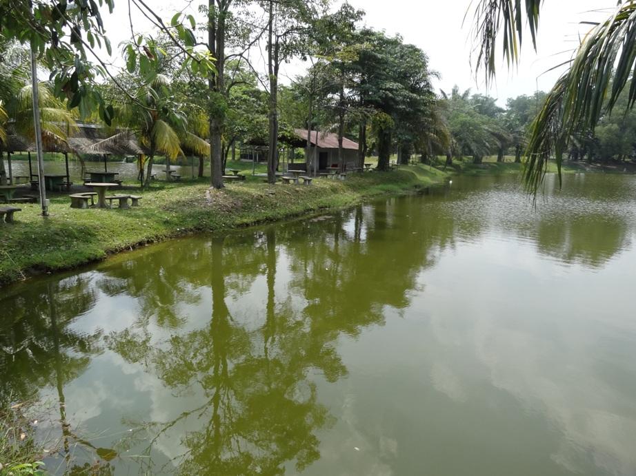 Fishing spots in kuala lumpur selangor tangguk tangguk for Freshwater pond fish