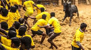 The central government has allowed Jallikattu this year in Tamil Nadu, reversing the ban placed by the Supreme Court.  Animal activists are upset that the populist decision ignores the cruelty inflicted upon the bulls.  But in Tamil Nadu many say the heritage sport does not harm these animals.