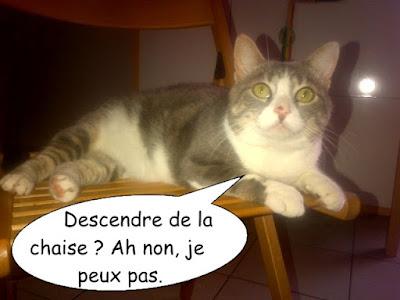 Toulouse, chat de 2 ans, installé sur une chaise.