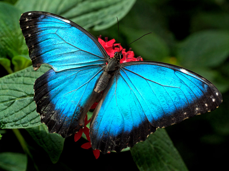 Superb image with printable butterfly pictures