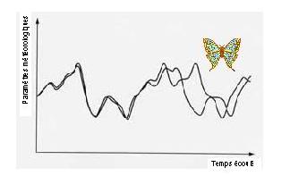 effet-papillon colibri