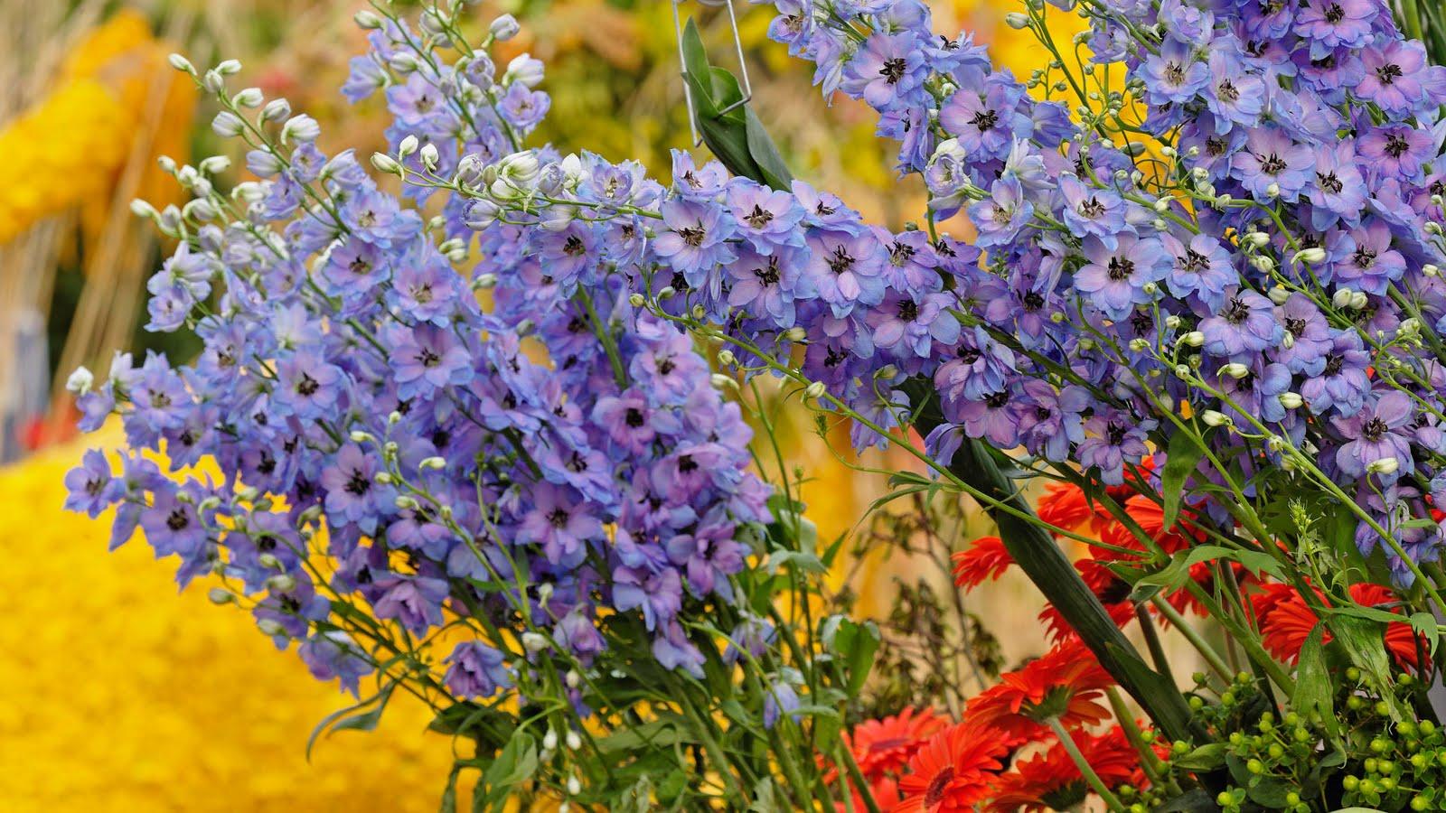 http://2.bp.blogspot.com/-0wyu6EexfkE/ThHx25Fc9aI/AAAAAAAAFGw/5xJX7agcfww/s1600/Flores+del+jardin-Garden+Flowers---2.jpg
