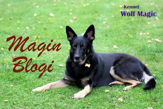 Magin Blogi