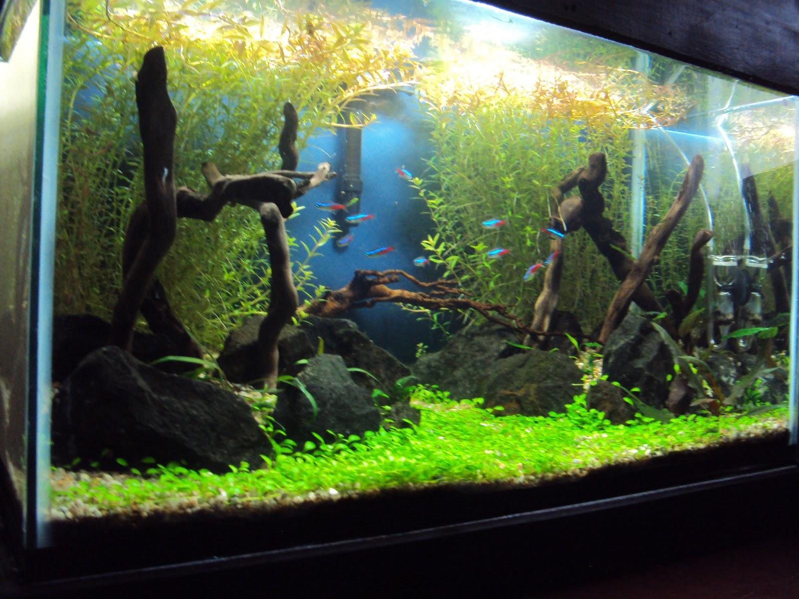 Plantando un acuario paso a paso jdb for Peceras de jardin