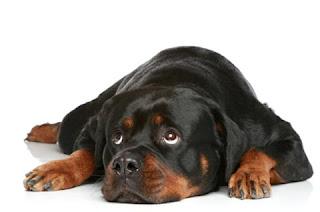 perro desconfiado