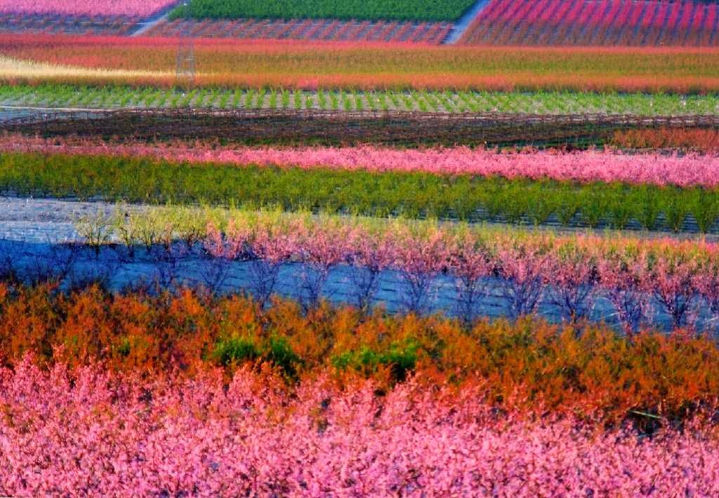 Resultado de imagen de floracion cieza