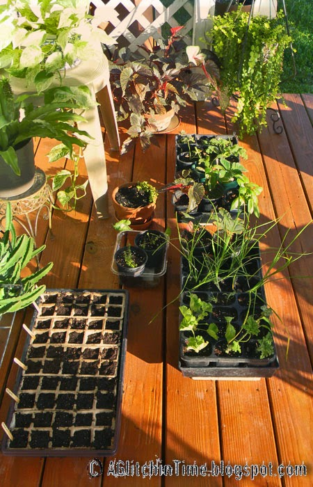 Plant starts on the Garden House Deck
