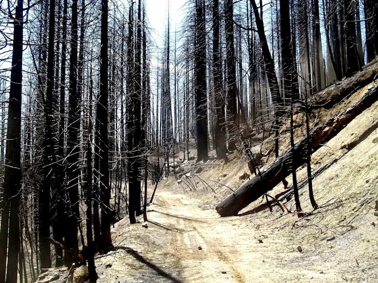 THE FIRE NEXT TIME - Stunning Film/Case Study of 2013 Rim Fire - A Must Watch Video