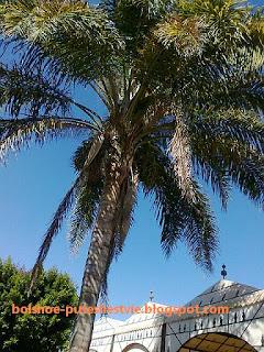 фотография пальмы