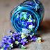 Beautiful Flowers in Bottle photos