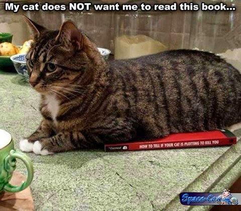 funny cats humor pics