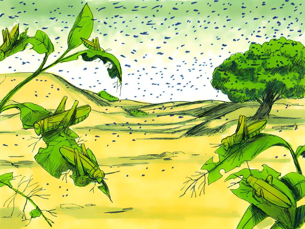 Forum on this topic: How to Get Rid of Frogs, how-to-get-rid-of-frogs/