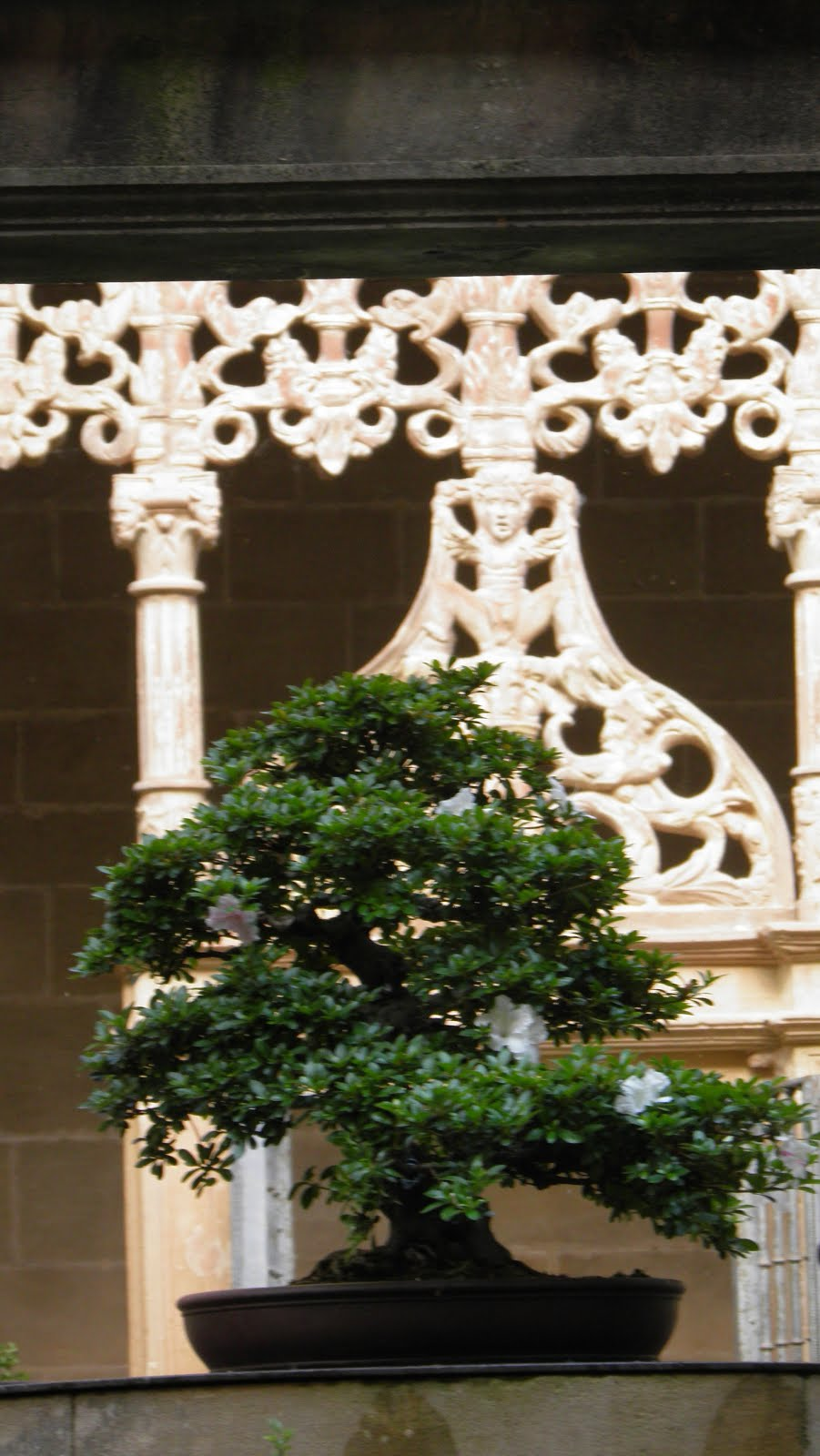 Nuestros bonsáis
