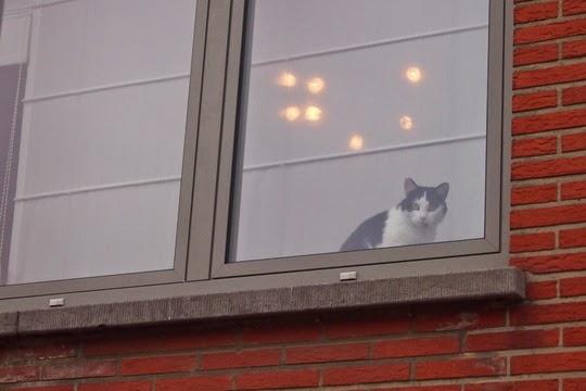 katten foto's