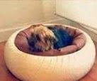 http://www.hogarutil.com/mascotas/perros/consejos/201301/cama-motera-mascota-18375.html