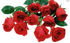rose day wishes 2014