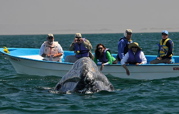 Whale of a time ... it's a once-in-a-life experience for boat group