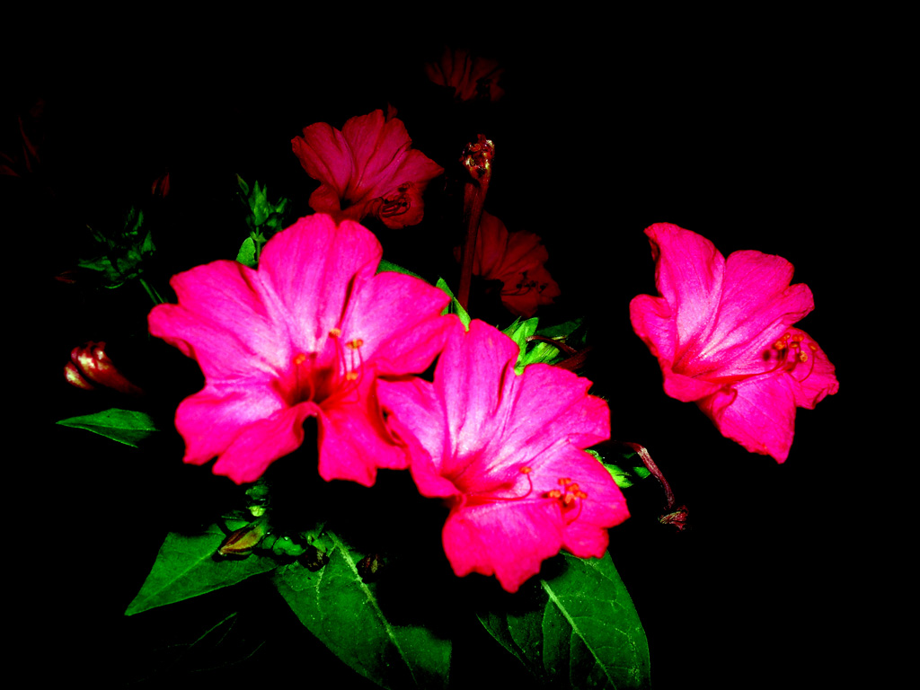 Digital World Pages Archive From My Archive Red Flower