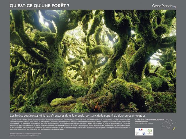 Les forêts couvrent 4 milliards d'hectares dans le monde, soit 31 % de la superficie des terres émergées