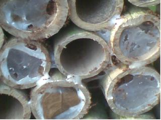 Bambu untuk beternak kroto yang mudah