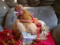 Happy Holidays from our Hens