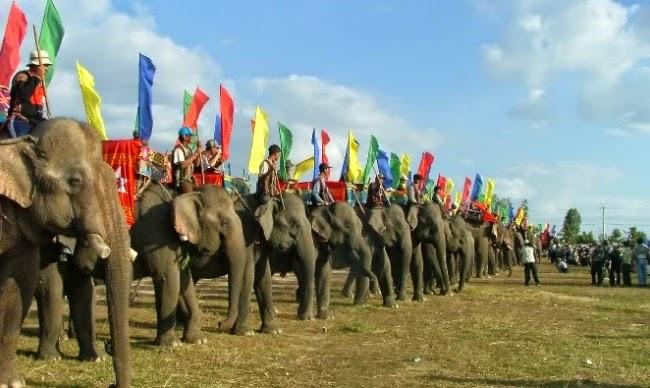 Image result for Elephant Race in vietnam