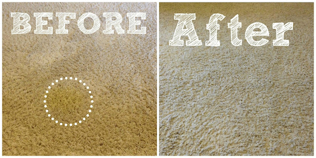little brags how to get rid of pet stains on carpet. Black Bedroom Furniture Sets. Home Design Ideas