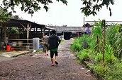 Kunjungan ke Peternakan Sapi Potong dan Perah tgl 19 Desember 2013