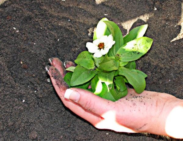 The Consummate Gardener: Florida Gardening and More: February 2014